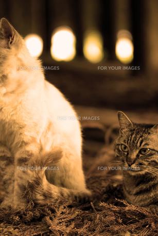 杉林でくつろぐネコの写真素材 [FYI00131826]