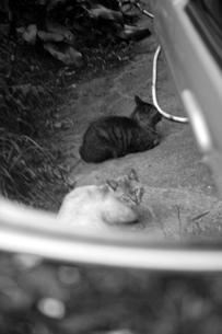 ミラー越しに見つめるネコの写真素材 [FYI00131846]