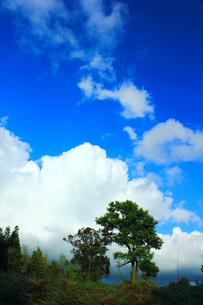 入道雲と木の写真素材 [FYI00131882]