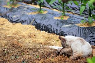ネコと胡瓜の苗の写真素材 [FYI00131888]