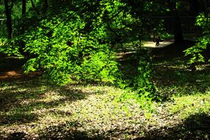 木漏れ日の写真素材 [FYI00131899]