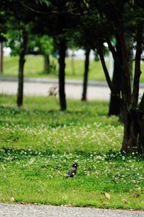 小鳥の素材 [FYI00132053]