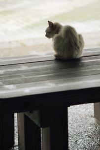 雨宿りの写真素材 [FYI00132136]
