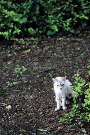野良猫の親子の写真素材 [FYI00132178]