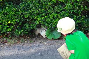 ネコを見つけた子供の素材 [FYI00132354]
