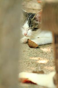 リラックスしている子猫の写真素材 [FYI00132416]