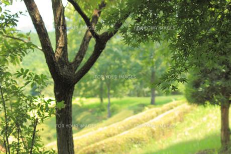 展望台からみた森の景色の素材 [FYI00132441]