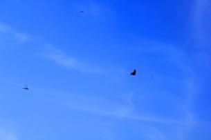 青空と蝶とトンボの写真素材 [FYI00132445]