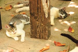 野良猫の写真素材 [FYI00132458]