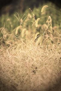 秋の野原の素材 [FYI00132554]
