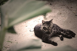 猫の素材 [FYI00132578]