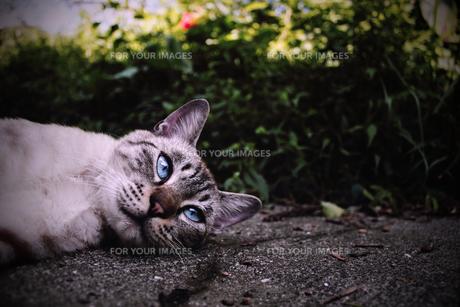 ネコの素材 [FYI00132585]