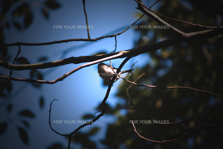 森で出会った小鳥の素材 [FYI00132598]
