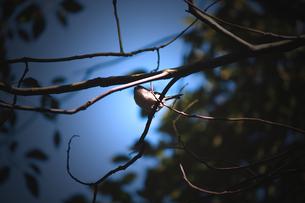 森で出会った小鳥の写真素材 [FYI00132598]