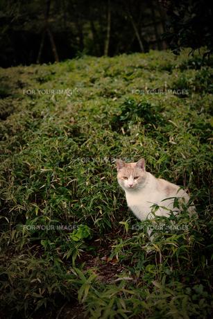 猫の素材 [FYI00132643]
