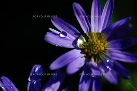 花の素材 [FYI00132737]
