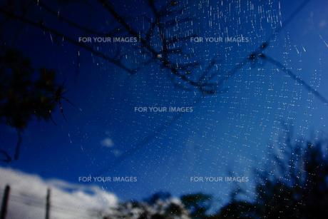 雨上がりの蜘蛛の巣の写真素材 [FYI00132753]