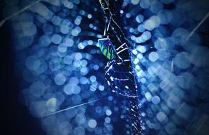 雨上がりの蜘蛛の巣の写真素材 [FYI00132759]