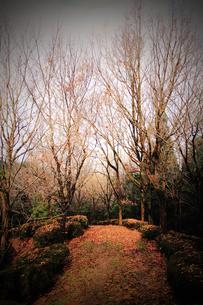 落ち葉の道の写真素材 [FYI00132815]