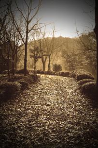 落ち葉の道の素材 [FYI00132819]