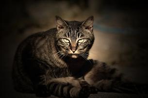 猫の素材 [FYI00132857]