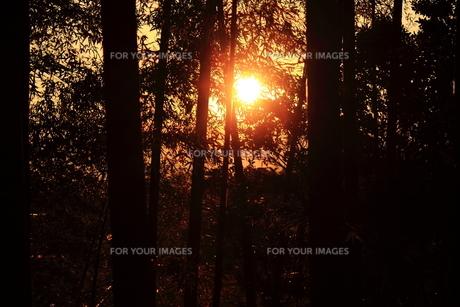夕日の素材 [FYI00132890]