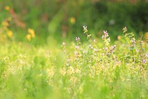 野原、春イメージの素材 [FYI00132895]