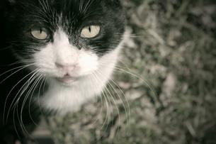 猫の写真素材 [FYI00133138]