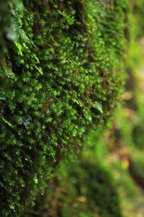 苔の素材 [FYI00133336]