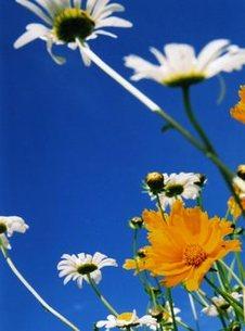 yellow & blue & whiteの写真素材 [FYI00133390]