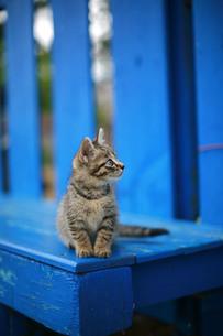 青いベンチと猫Ⅱの写真素材 [FYI00133611]