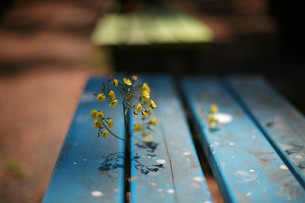 座れないベンチの写真素材 [FYI00133619]