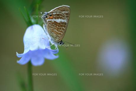 鐘形の花と蝶の写真素材 [FYI00133622]