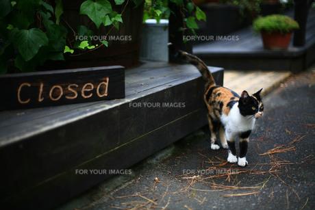 るすばん猫の写真素材 [FYI00133628]