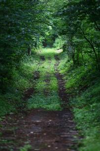 新緑に覆われた道の写真素材 [FYI00133634]