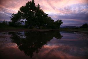 水面に映る木々の写真素材 [FYI00133636]