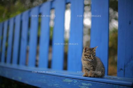 野良猫と青いベンチの素材 [FYI00133639]