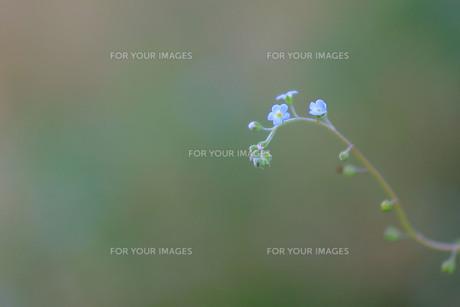 緑の背景に浮かぶ小さな花の素材 [FYI00133644]