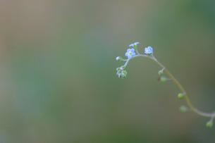 緑の背景に浮かぶ小さな花の写真素材 [FYI00133644]