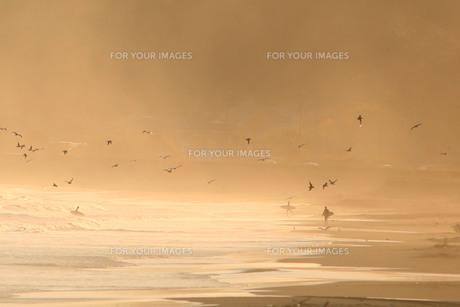 波飛沫が上がる海岸とサーファーと鳥の群れの素材 [FYI00133662]