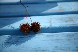 青いベンチと植物の写真素材 [FYI00133666]