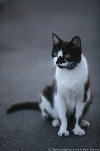 ユニークな模様の野良猫の写真素材 [FYI00133677]