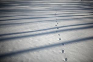雪の路面に落ちる木漏れ日と小動物の足跡Ⅱの素材 [FYI00133681]