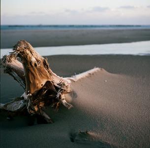 海辺に打ち上げられた流木の写真素材 [FYI00133683]