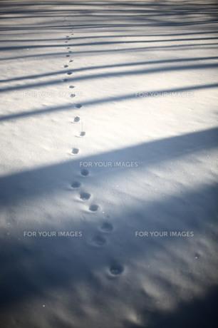 雪の路面に落ちる木漏れ日と小動物の足跡の素材 [FYI00133684]