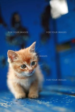 青いベンチと仔猫の写真素材 [FYI00133685]