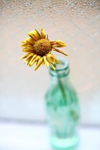 緑色のビンと一輪挿しの黄色い花の写真素材 [FYI00133688]
