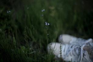 小さな花とスニーカーの素材 [FYI00133694]