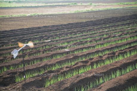 広がる田園と風車の素材 [FYI00133701]