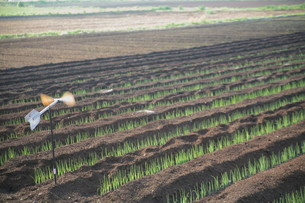 広がる田園と風車の写真素材 [FYI00133701]